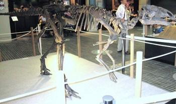 008プロバクトロサウルス.JPG
